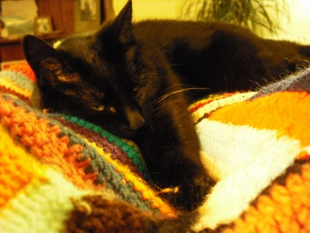 My cat, Analea, who will be turning 20 this year.   Photo credit:  Es Bee